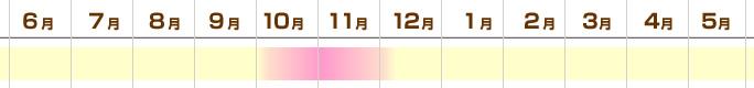 fuyushimeji_outb.jpg