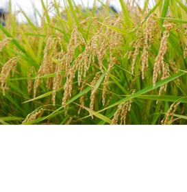variety_kinoko_03.jpg